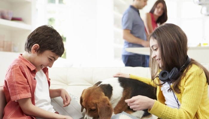 Children Playing With Dog On Sofa